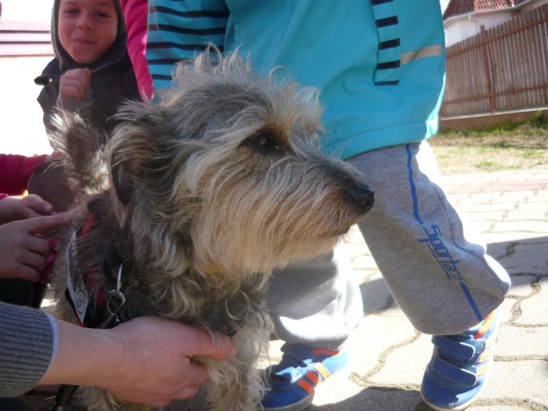 KULTURÁLIS TALÁLKOZÓ KISKEDVENCEINKKEL: Pillanatkép egy korábbi ember-állat kutyás találkozóról a Homokkertben