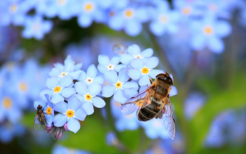 BEE HAPPY! - BEPORZÓK NAPJA: Illusztratív fotó egy virágot beporzó méhről