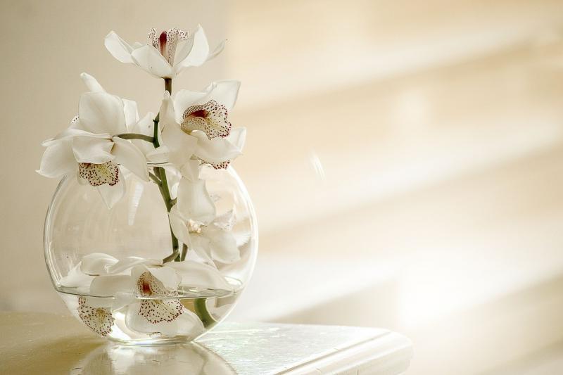 NŐNEK LENNI JÓ!: Orchideát ábrázoló illusztratív fotó