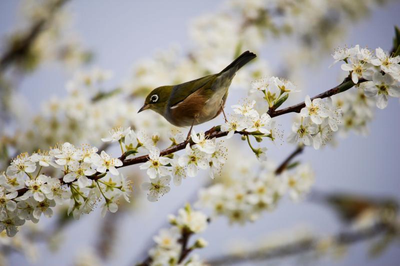 Online kiállítás a madarak és fák napja alkalmából