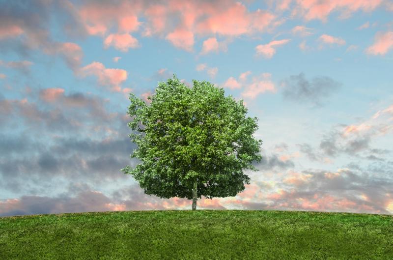 Madarak és fák napja kvíz
